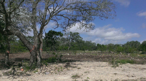 Land Clearing In San Antonio