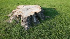 San Antonio Stump Removal